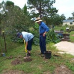 Un-ceremonial planting of the Loquat Tree