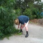 Ross weeding
