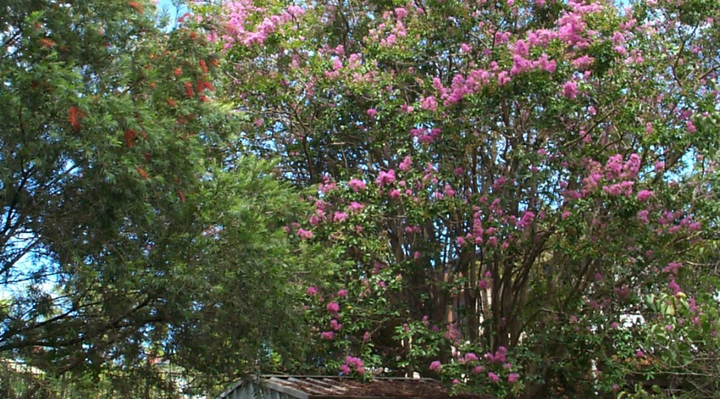 Crepe Myrtle and Bottle Brush