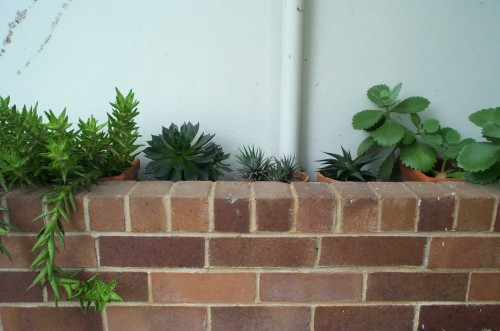 Succulents at the front door