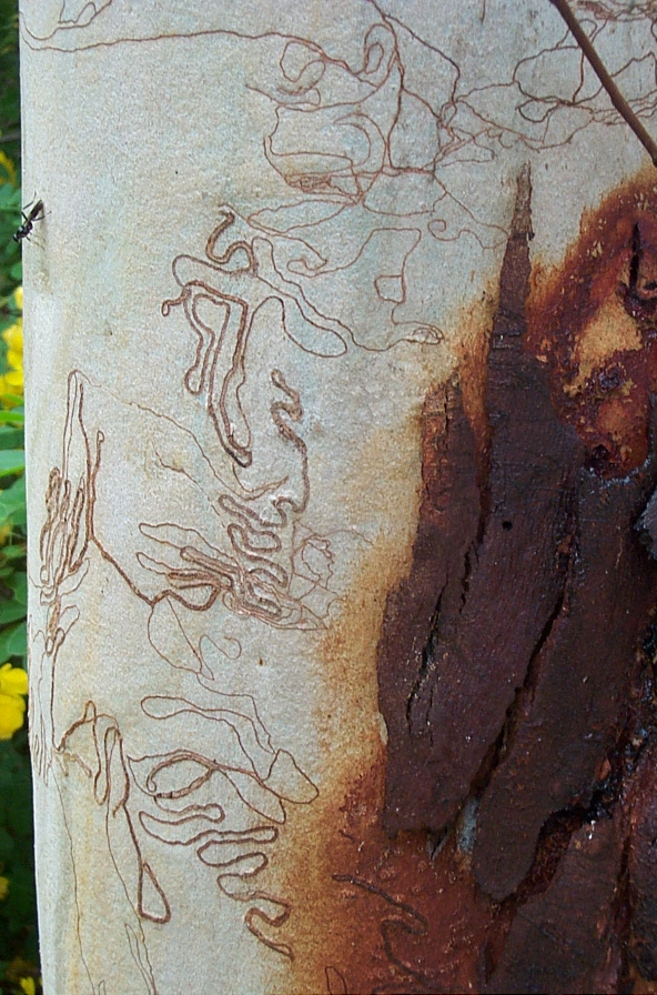 insect on scribbly tree